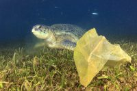 Ercros, ErcrosBIo PHA, bioplástico, plástico biodegradable, plástico didrodegradable, agua, mar, medio ambiente, Expoquimia, Expoquimia 2017, novedades