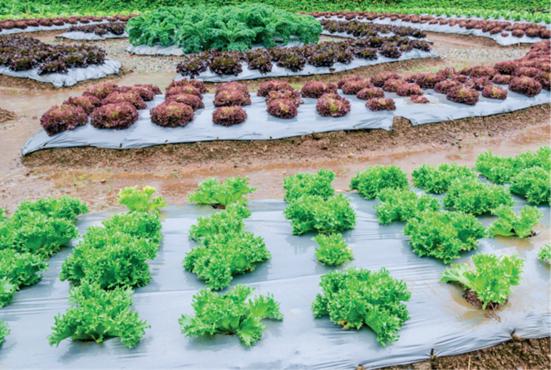 biobatch, compuestos, biodegradables, bioplásticos, agricultura, bolsa biodegradable, resinex, medio ambiente, agricultura, bolsas de basura, compostabilidad, plásticos, medio ambiente, economía circular, technocompound