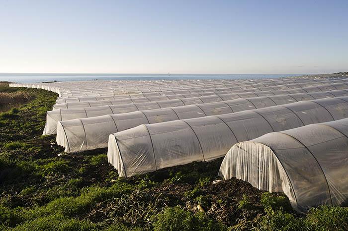 Estabilizador Sabo STAB UV 216 para plásticos agrícolas