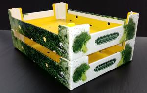 cipasi, grupo hinojosa, envases 100% reciclables, cartón plástico, freshbox, plástico, envases, packaging, economía circular, sostenibilidad