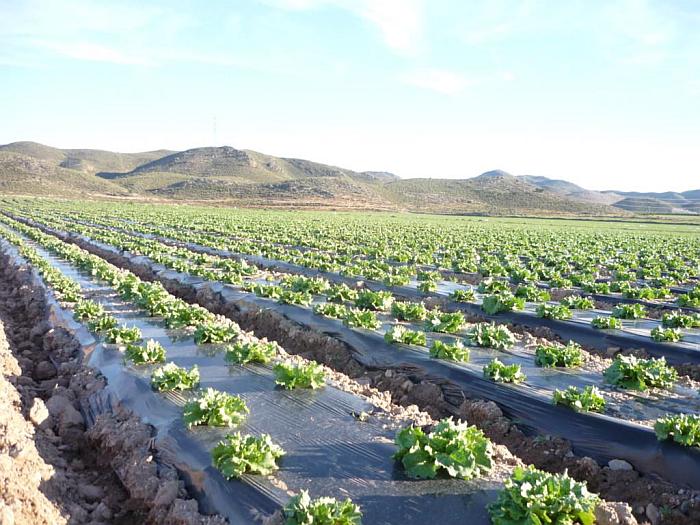 acolchados agrícolas biodegradables