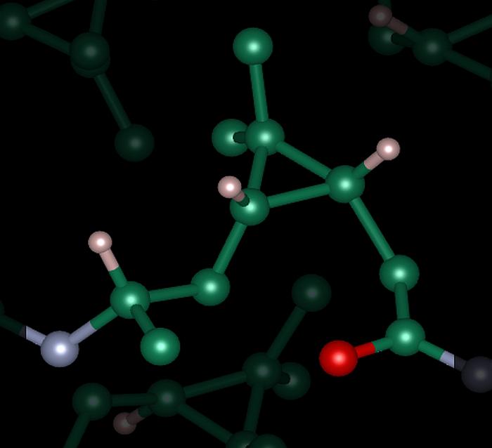 Desarrollan biopoliamidas a partir de residuos biológicos