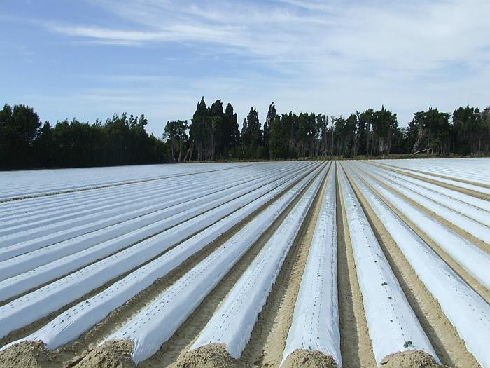 plásticos agrícolas