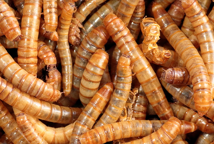 insectos ap waste