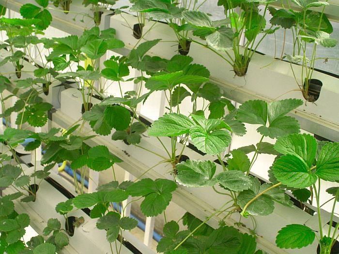 Nuevos plásticos para mejorar la eficiencia de los invernaderos